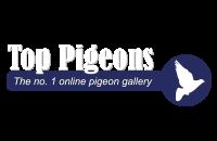 Top Pigeons